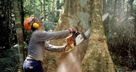 مهددات الاشجار