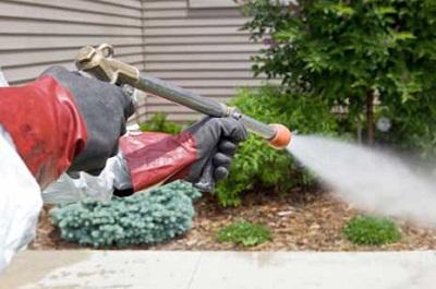 شركة رش مبيدات
