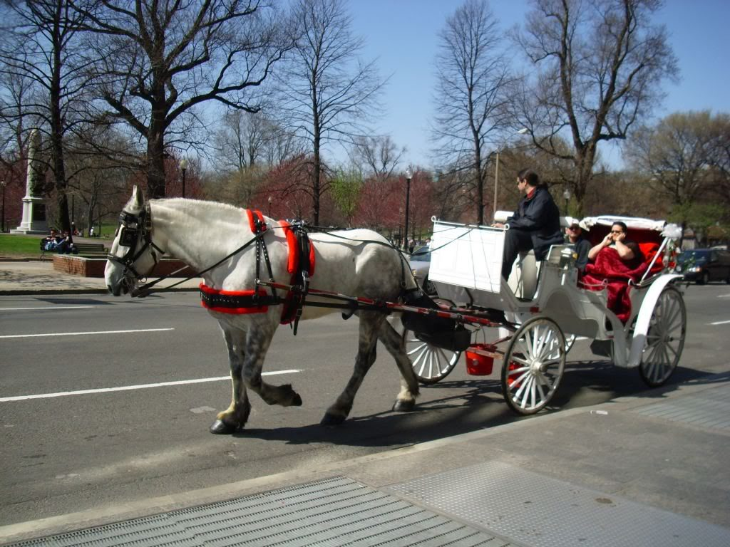 horse-drawn-carriage-in-boston-common